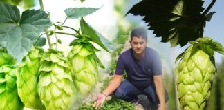 Hop Shoots Most Expensive Vegetable In The World is Farming now in Bihar